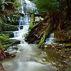Myrtle Gully Falls, Hobart #6 by Chris Cobern