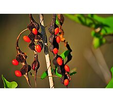 Red Seeds Photographic Print