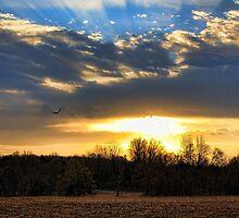 Sunup by Carolyn  Fletcher