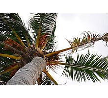 Under the Palm Trees Photographic Print