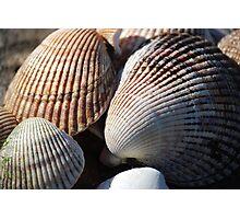 Shellfish Photographic Print