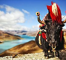 Yak in Traditional Dress in front of Lake in Tibet by ieatstars