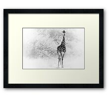 Giraffe coming out of the bushes Framed Print