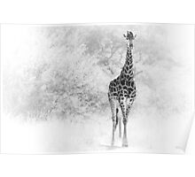Giraffe coming out of the bushes Poster