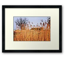 Life And Death Of King Midas - From The 'King Midas Series' Framed Print