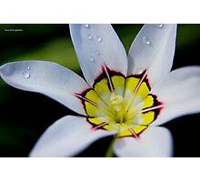 White Gem Photographic Print