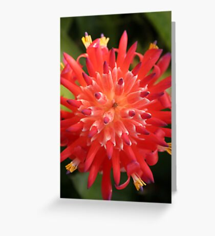 Bromeliad Greeting Card