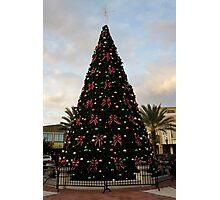 A Florida Tree Photographic Print