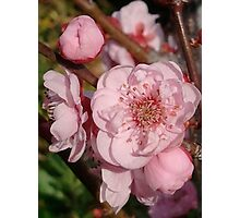 Happy Spring Blossoms Photographic Print