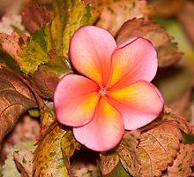 Flower by stevebrooks