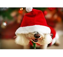Christmas Puppy Photographic Print