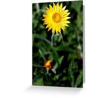 Nature Series 4 Greeting Card