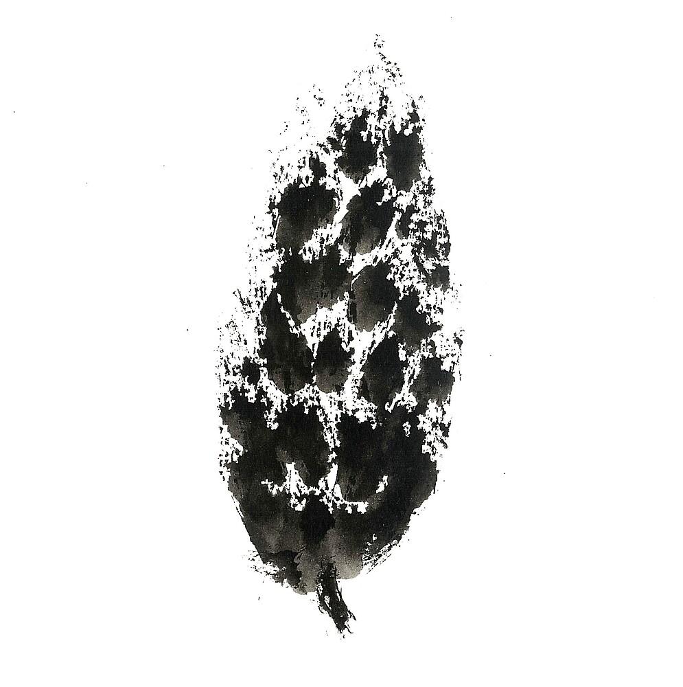 pine cone (haiga XXI) by dthaase