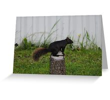 Black Squirrel Visit Greeting Card