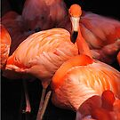 Flamingos by Robin Lee
