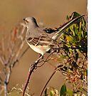 Mockingbird by Robin Black