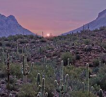 A Desert Pink Morning  by Judy Grant