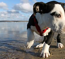 Louie at the bay by Kristina Gale