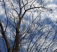 Tree and Clouds by SamanthaArlia