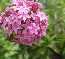 Flowers by SamanthaArlia