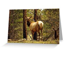Elk in the Mountains Greeting Card