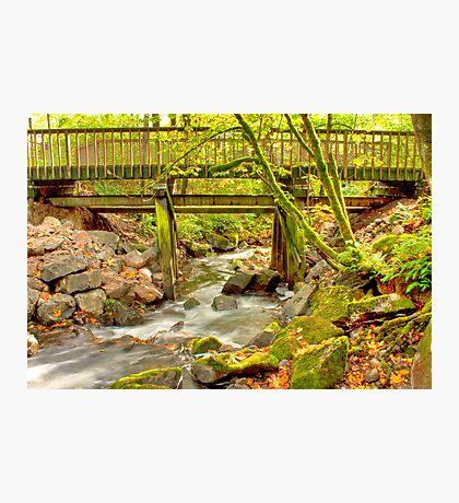 Mossy Old Bridge Photographic Print