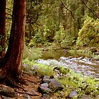 """Down Along The Riverside...."" by Lynn Bawden"