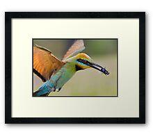 Rainbow Bee-Eater Framed Print