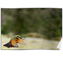 Rainbow Bee-Eater 451 Poster