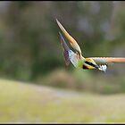 Rainbow Bee-Eater 452 by John Van-Den-Broeke