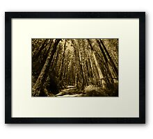 pathway of the forest Framed Print
