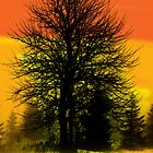 Silhouette trees at sunset by kreativekate