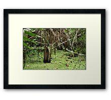 Cypress Stump Framed Print