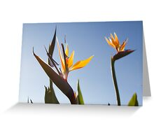 Paradise In San Diego Greeting Card