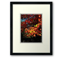 Enjoy what nature has to offer Framed Print