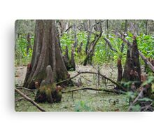 Swamp Floor Canvas Print