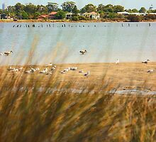 Canning River #2, Shelley, Western Australia by Elaine Teague