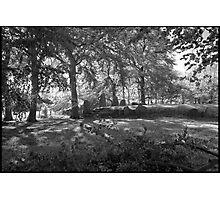 Waylands Smithy Photographic Print