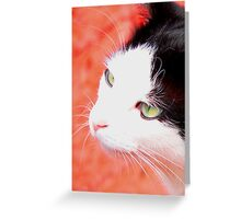 The Cat's Whiskers Greeting Card