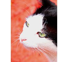 The Cat's Whiskers Photographic Print