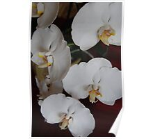 White Orchid IV Poster