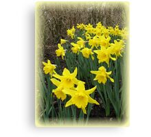 Easter Daffodils Vignette Canvas Print