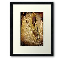 Gypsy Gold Framed Print