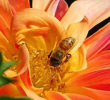 Golden Nectar by shutterbug2010