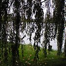 Big river, the weeping willow by patjila