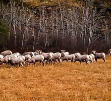 Just a part of the herd by Bryan D. Spellman