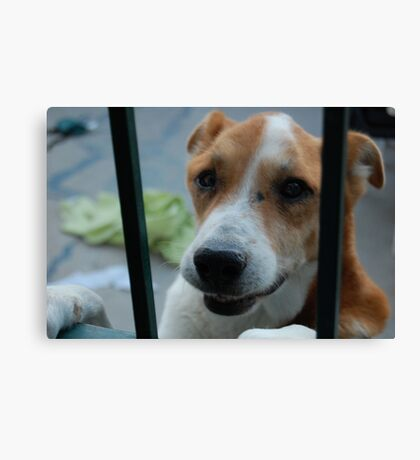 Lucky Puppy Canvas Print