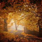 Turn to Fall by Ildiko Neer