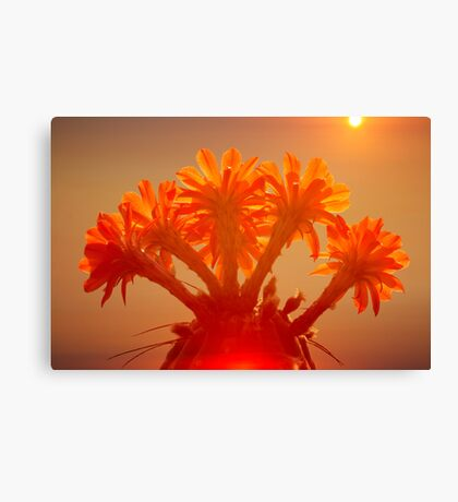 Desert Flower Canvas Print