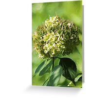 Just Green Hydrangea Greeting Card